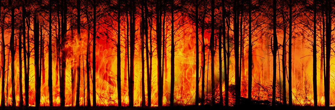 La vulnerabilidad del territorio frente a los incendios forestales