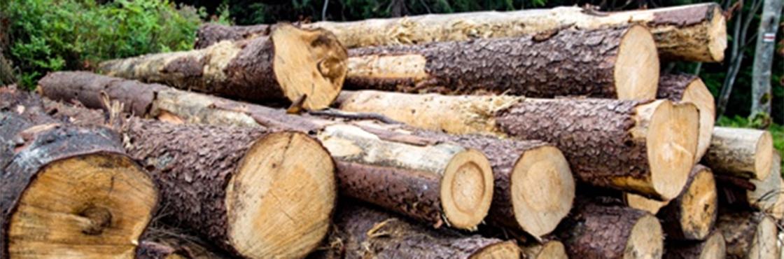 Valoración Económica de las Existencias en Parcelas de minifundio forestal